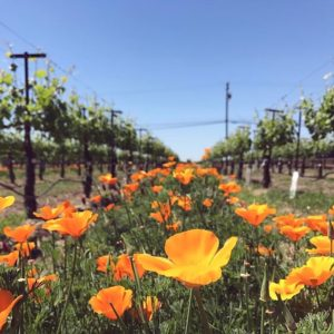 Dame Wine®   Celebrating Wine, Life and Inspiring Colorful